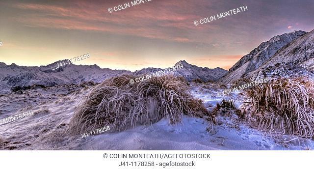 Frosted tussock grass, Mt Sefton to Aoraki / Mt Cook, dusk, Burnett Mountains