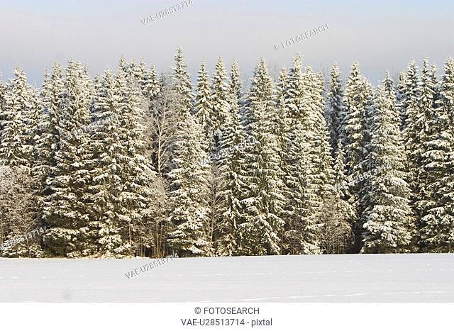blizzard, cold, autumn