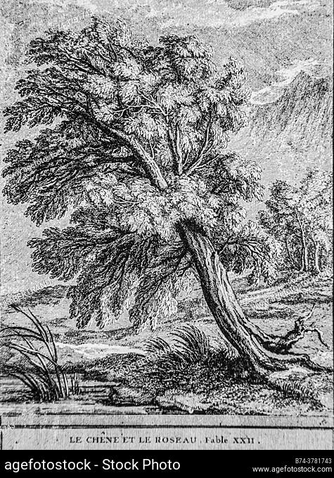 the oak and the reed, fables of the fountain, publisher talan, dier 1904, drawing by j. b. oudry