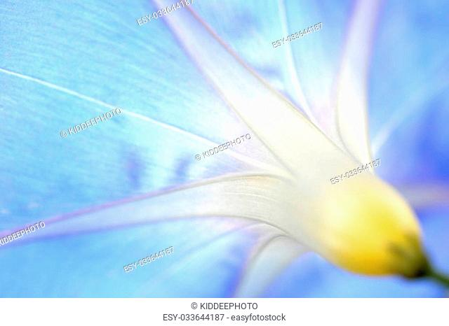 super macro shot of flower for beautiful background