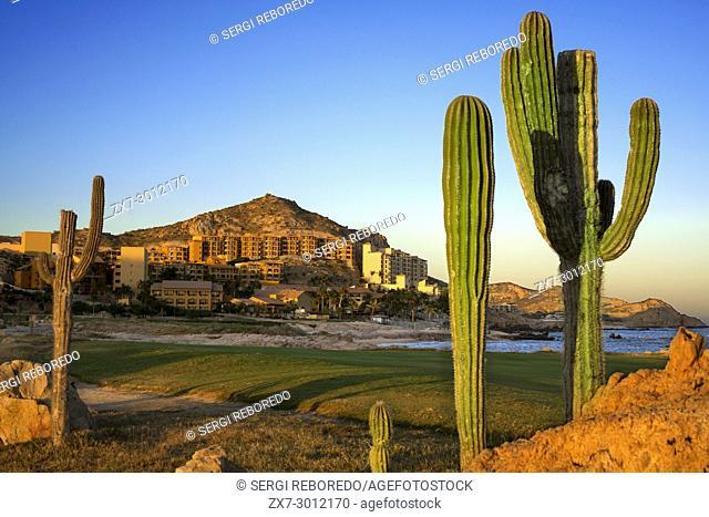 Landscape with cactus in front of Cabo del Sol Resort & Golf, Cabo San Lucas, Los Cabos, Sea of Cortez, Baja California, Mexico