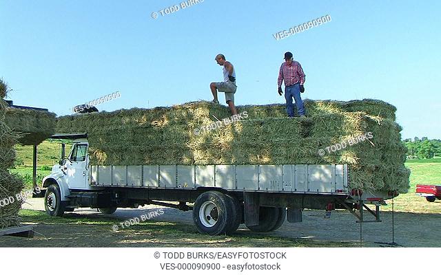 Farmers loading hay onto truck
