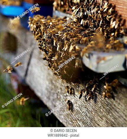 Beehive, Croatia, Europe