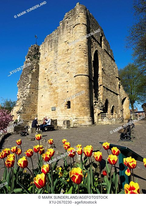 Spring Tulips at the Kings Tower Knaresborough Castle Knaresborough North Yorkshire England