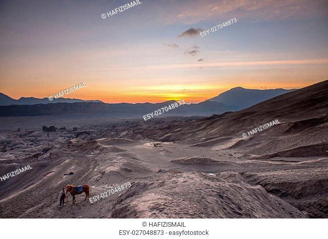 Horse and Handler at Sunrise in the desert