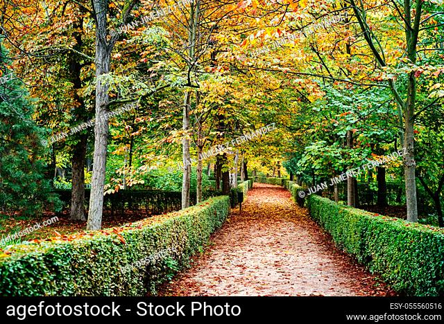 Scene of the Buen Retiro Park in Madrid during the fall with vibrant colors and the paths covered with fallen leaves