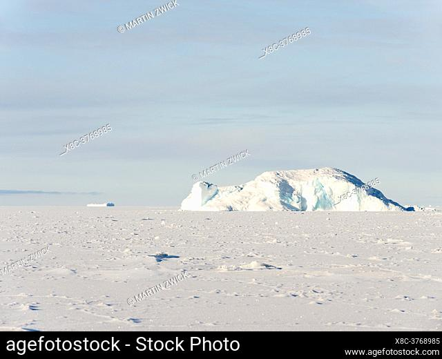 Icebergs frozen into the sea ice of the Uummannaq fjord system during winter in the the north west of Greenland, far beyond the polar circle