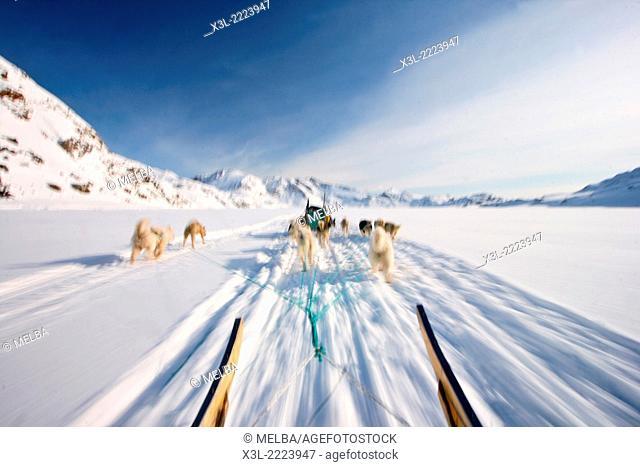 Dog sled. Kulusuk. Greenland
