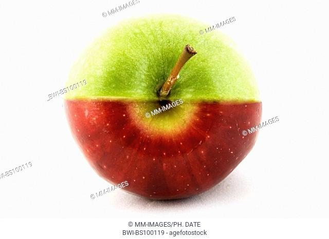 apple (Malus domestica), an apple made up of half green, half red