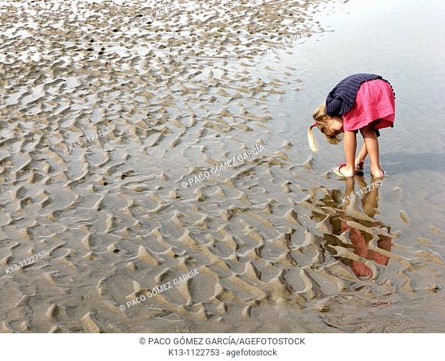 Niña cogiendo conchas en las playas de De Haan  Bélgica  Mar del Norte