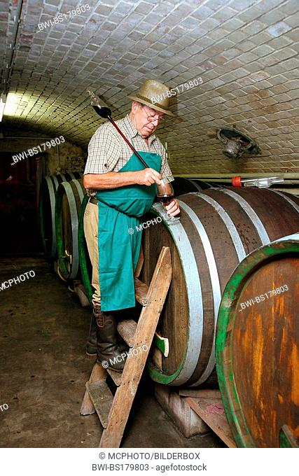 Winegrower in the wine cellar