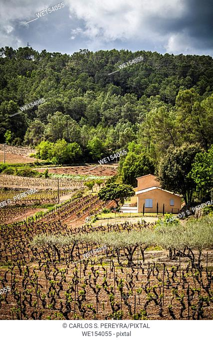Vineyards landscapes in Provence region in France Europe