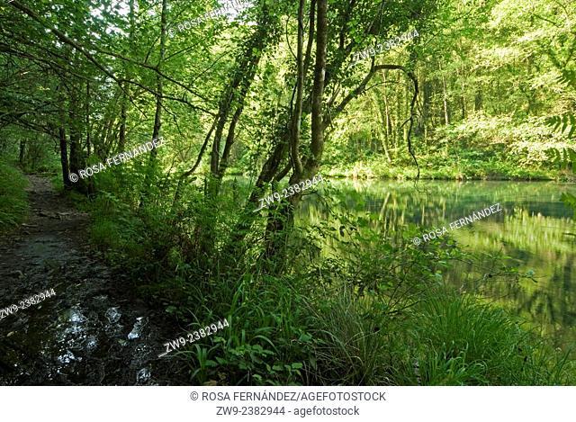 Eume River, Fragas do Eume Natural Park, Pontedeume, A Coruña, Galicia, Spain
