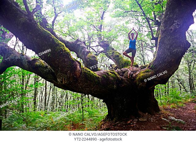 Young woman in tree pose on big chestnut tree