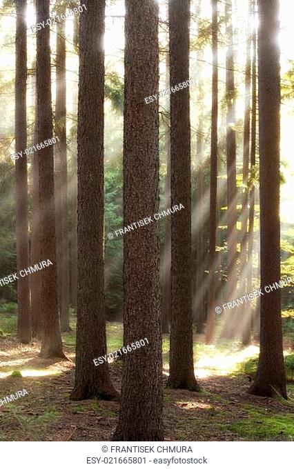 autumn forest scene with sun rays shining through branches