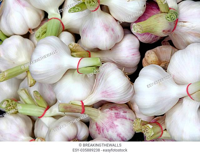 Bunch of fresh garlic bulbs sale on retail market