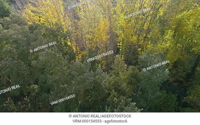 Poplar forest. Almansa. Albacete province