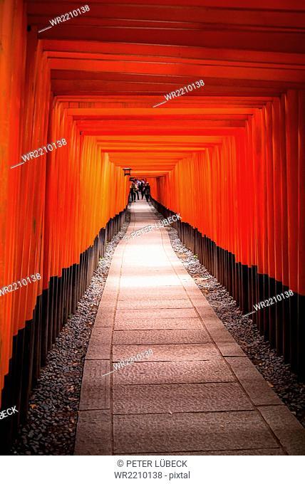 Path of torii gates at Fushimi Inari-taisha, the head shrine of Inari located in Kyoto, Japan