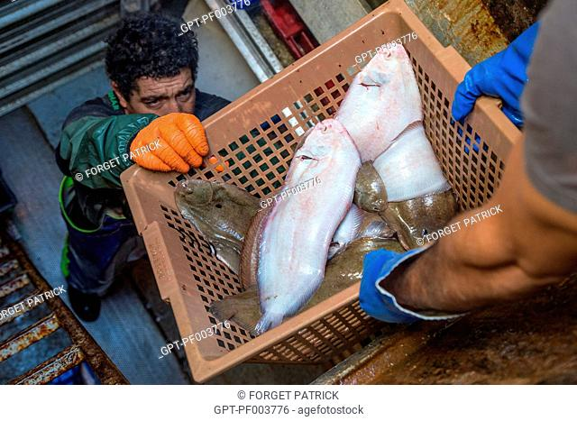 LOWERING THE FISH (SOLES) FOR STORAGE IN THE REFRIGERATORS, SEA FISHING ON THE SHRIMP TRAWLER 'QUENTIN-GREGOIRE' OFF THE COAST OF SABLES-D'OLONNE (85), FRANCE