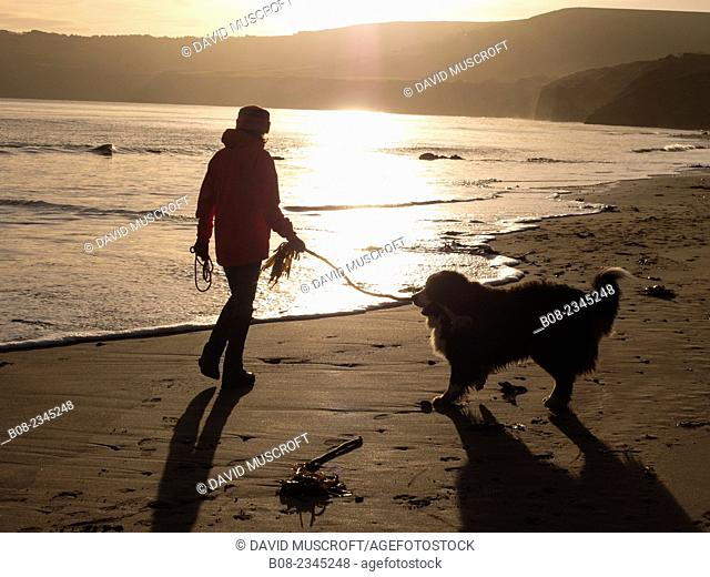 woman playing with a Bernese Mountain Dog on the beach, Robin Hoods Bay, Yorkshire, Britain