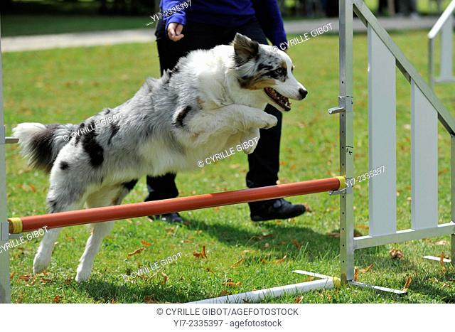 Dog jumping over an obstacle bar during competition