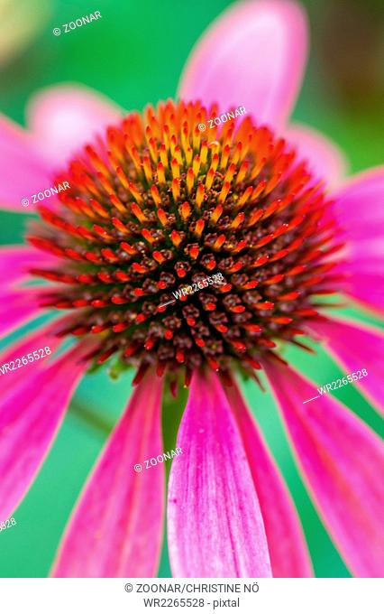 Summergarden beauty