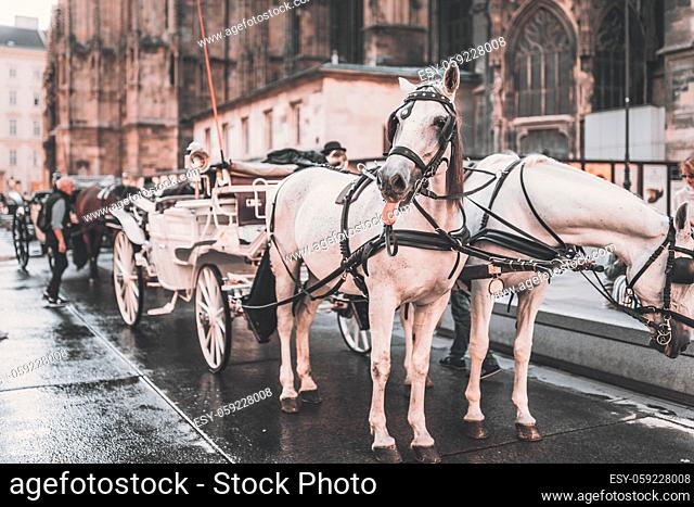 Horse drawn carriage, hackney cab, horse poking out his tongue