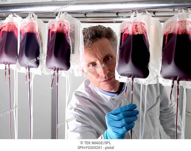 Donor blood processing. The donor blood is being separated into its component parts