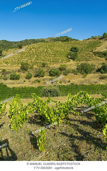 Capafons-Osso winery, comarca del Priorat, Tarragona province, Catalonia, Spain