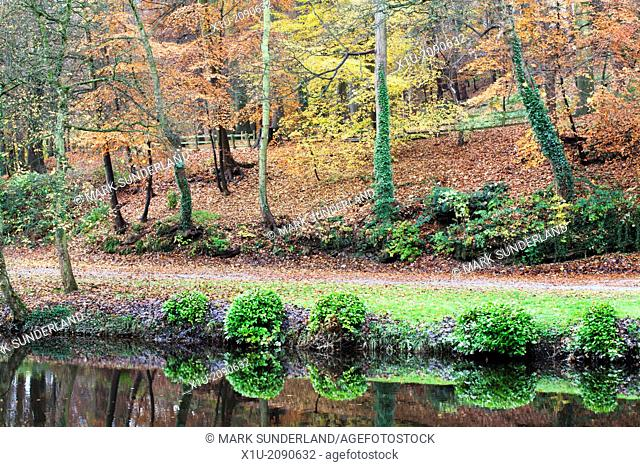 Beech Trees in Autumn on Long Walk at Mother Shiptons Knaresborough North Yorkshire England