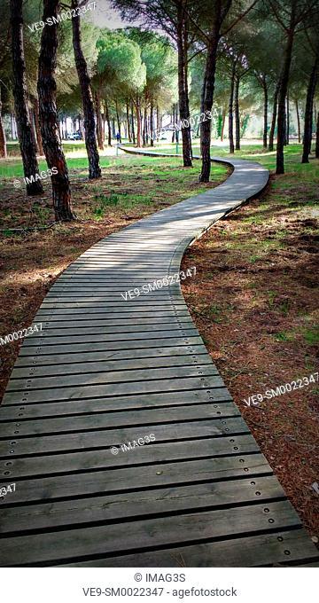 Path near La Rocina. Doñana National Park. Huelva province. Spain
