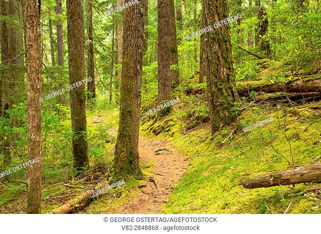 South Breitenbush Gorge National Recreation Trail, Willamette National Forest, Oregon