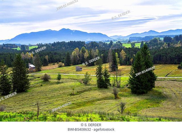 Breiter Filz moor, Ammergau Alps in backgroung, Germany, Bavaria, Oberbayern, Upper Bavaria