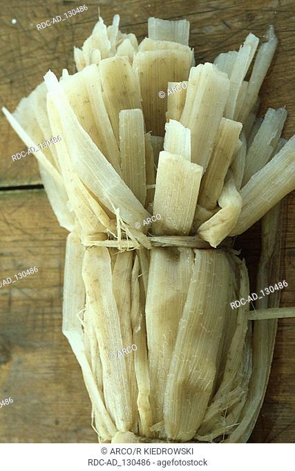 Egyptian Paper Plant plant fibres Egypt Cyperus papyrus