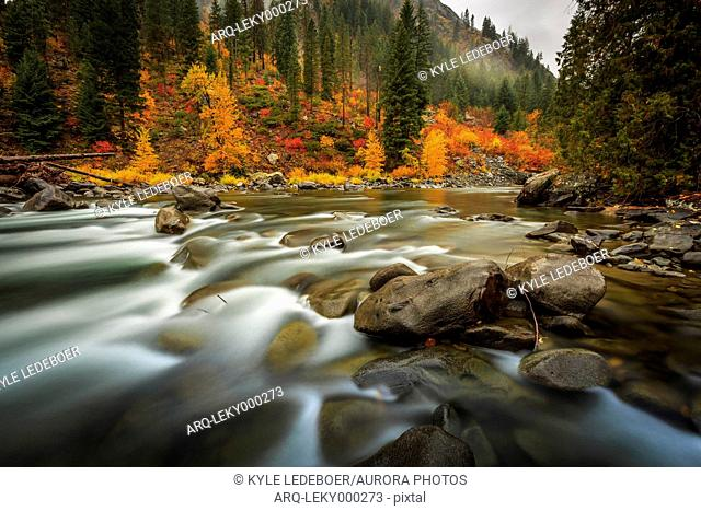 Fall Color Illuminates The Flowing Water Of Icicle Creek