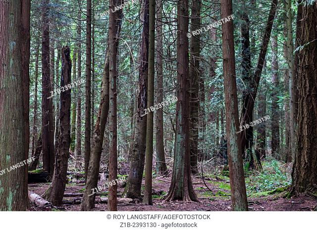 Forest view in Pacific Spirit Park, Vancouver, Canada