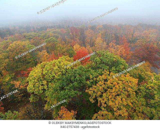 Aerial view fall nature scenery of colorful autumn trees in fog at Dorset, Muskoka, Ontario, Canada