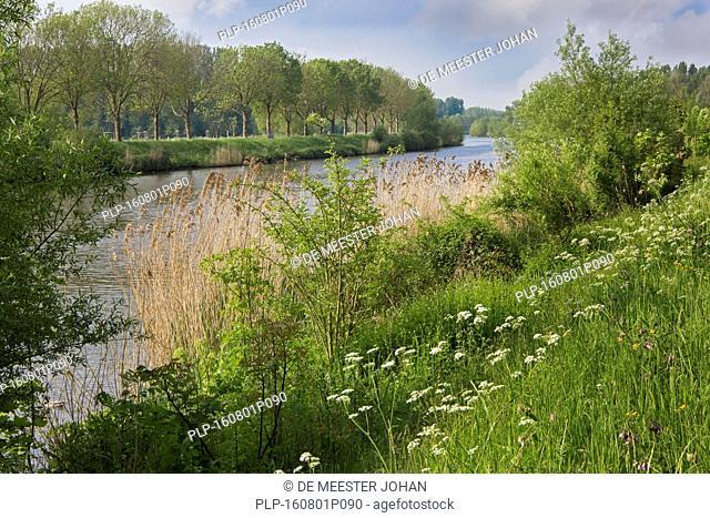 The river Schelde / Scheldt in summer, Zevergem, East Flanders, Belgium