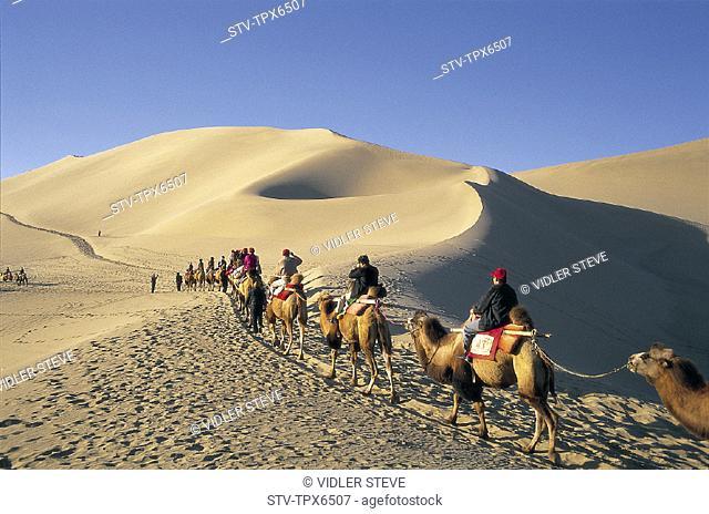 Asia, Camel, Camels, China, Desert, Dune, Dunes, Dunhuang, Gansu, Holiday, Landmark, Mingshan, Mount, Province, Riding, Sand, Si