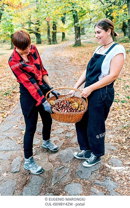 Best friends collecting chestnuts, Rezzago, Lombardy, Italy