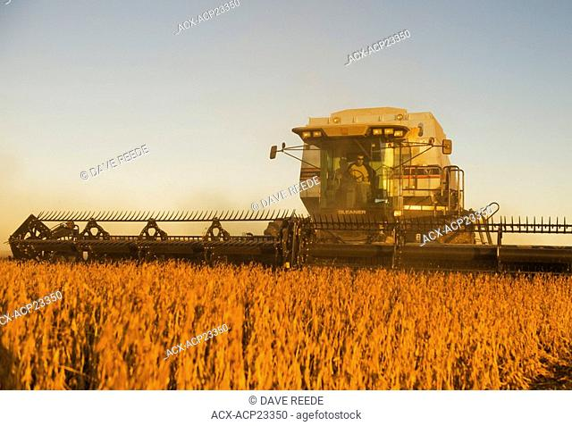 Combine harvester on soybean field in the early evening. Near Lorette, Manitoba, Canada