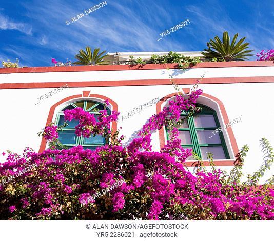 Bougainvillea in flower outside apartments in Puerto de Mogan on Gran Canaria, Canary Islands, Spain
