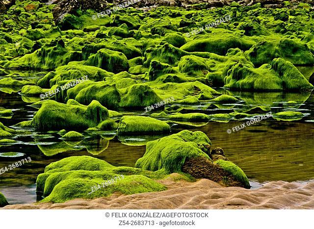Moss at stones at La Beciella Beach Asturias Spain