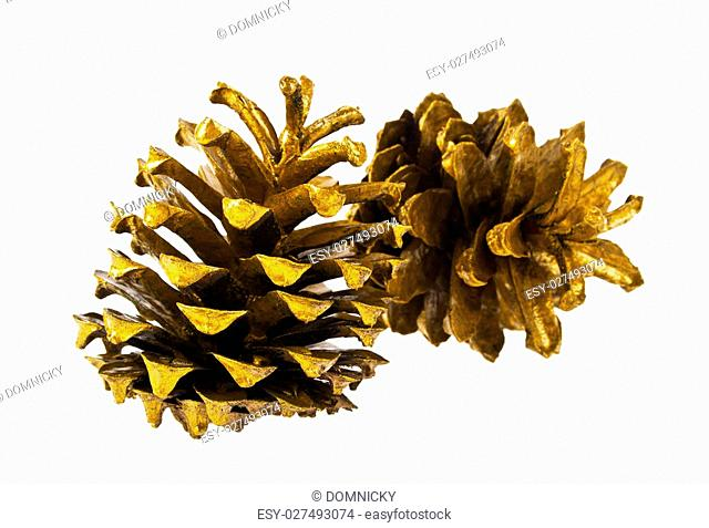Golden pine cones isolated on white background