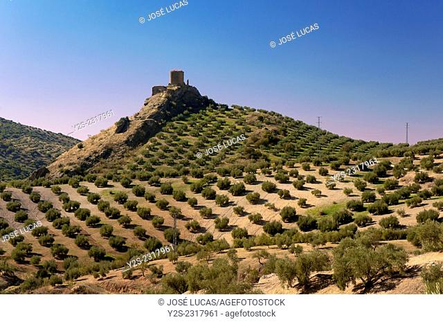 Castle of the Viboras and olive trees, Martos, Jaen-province, Region of Andalusia, Spain, Europe