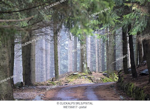 Trails in the park Adamello, province of Brescia, Italy
