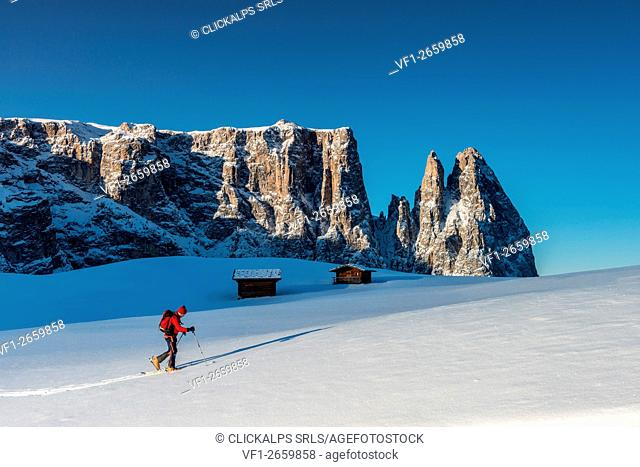 Alpe di Siusi/Seiser Alm, Dolomites, South Tyrol, Italy. Cross country skiing in the morning on the Alpe di Siusi/Seiser Alm