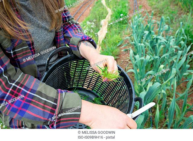 Cropped view of woman weeding vegetable patch