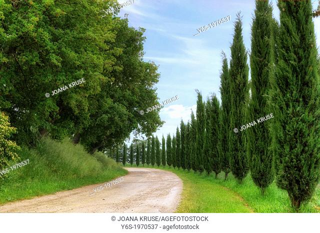 cypress alley in Val d'Orcia, Tuscany, Italy