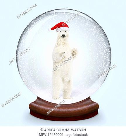 Snow globe, Polar Bear smiling wearing Christmas hat